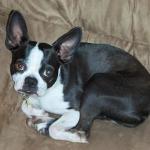 Bruno (Booger)