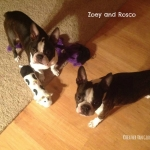 zoey-and-rosco