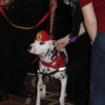 Fire Safety Dog