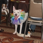 Zoey of Stick it to Canine Cancer