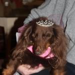 Precious blind pup.
