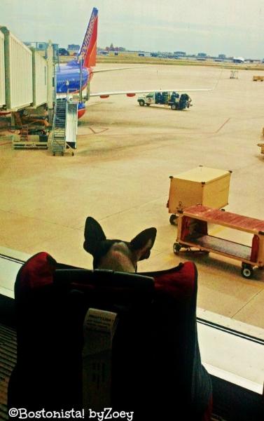 Flying Boston 4