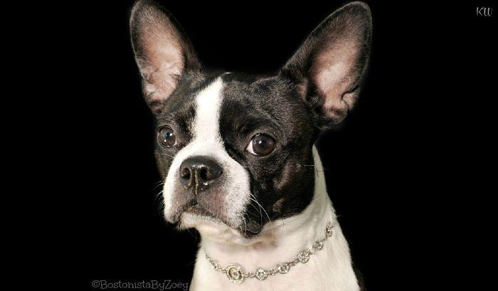 collars- puppia crystal collar 1