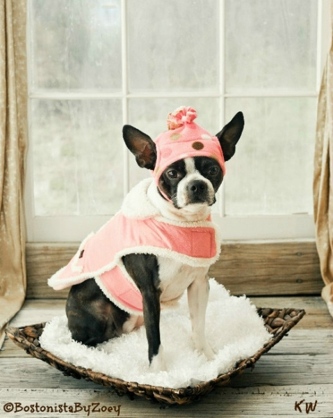 Dog coats- pink coat, pink polka dot hat 1