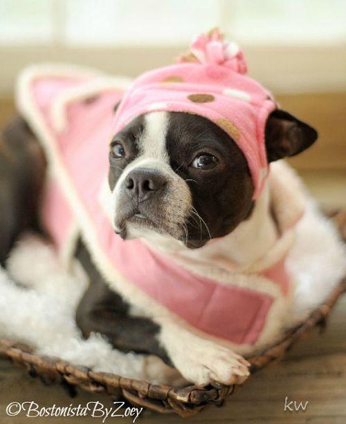 Dog coats- pink coat, pink polka dot hat 2