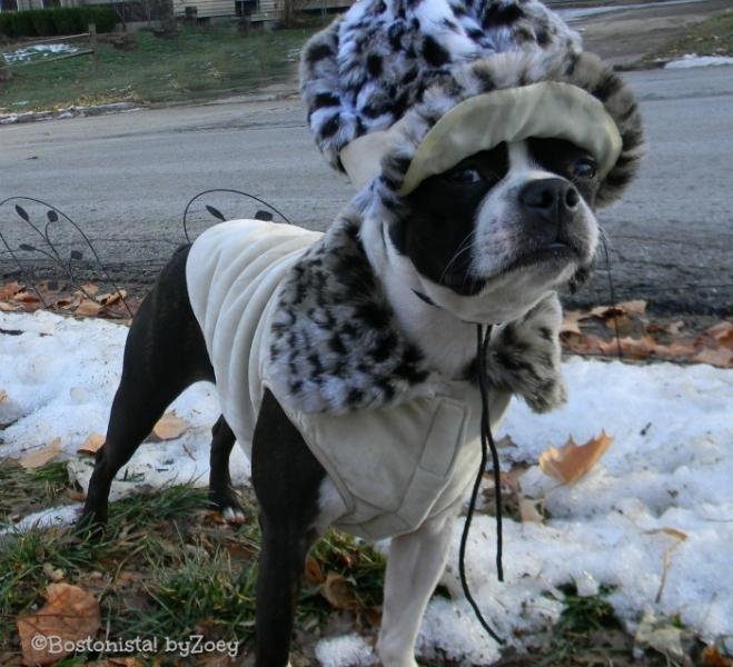 Dog Coats- Dogo Leopard coat 3