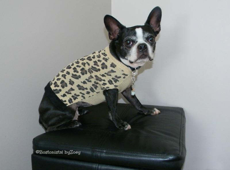 dog sweaters- leopard-sweater-daisy
