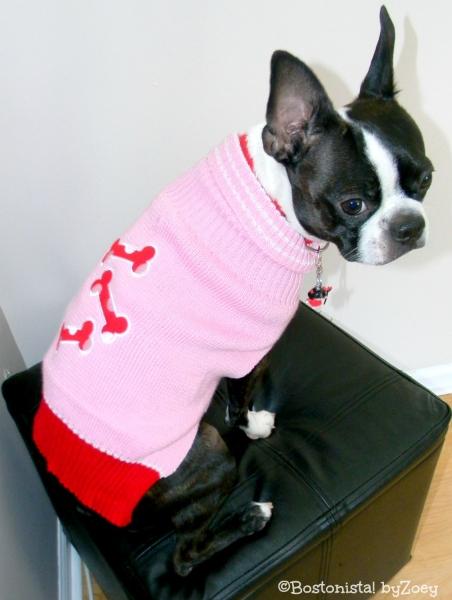 dog sweaters- pink-bone-sweater