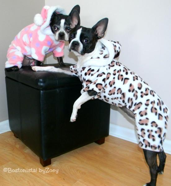 Dog PajamasSnowsuit