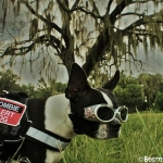harnesses- zombie alert dog 1, doggles
