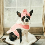Dog coats- pink coat, pink polka dot hat 1