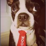 dog bow ties- woof tie 1