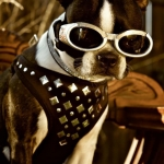 doggles- skull doggles 1, studded harness