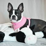 harnesses- puppia pink dotty harness 1