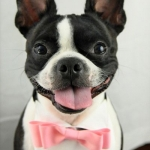 Dog bow ties- pink bow tie 1