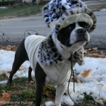 Dog Coats- Dogo Leopard coat 3
