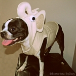 hoodie-elephant