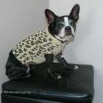 dog sweaters- leopard-sweater-daisy