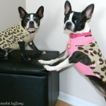 dog sweaters- leopard-sweaters