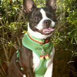 Harnesses- one love green harness 1