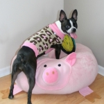 pig-bed-leopard-sweater