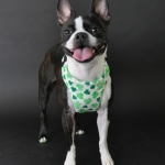 shamrock-harness-2
