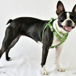 shamrock-harness-3