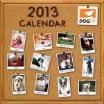Zoey in 2013 DogTV calendar!