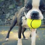 My Bestie: Chewy