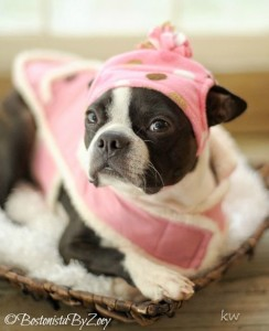 pink dog hat 2