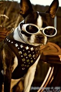 My future's so bright, I gotta wear shades!