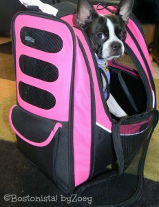 Pet Gear IGo2 Escort