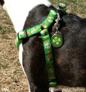 green shamrock tag