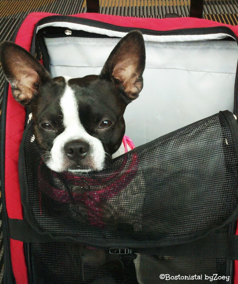 Zoey s favorite pet carriers air travel on southwest for Air travel with dog in cabin