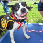 Boston Bash and Bark n Blues Fun!