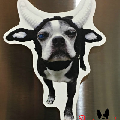 Daisy Cantankerous Cow
